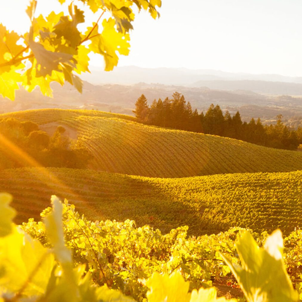 wineries in Sonoma County
